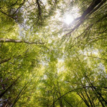 Naturopatia: cos'è, chi la pratica e come funziona